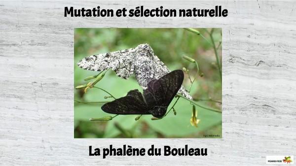 Sélection naturelle et mutations