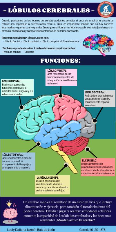 Lóbulos Cerebrales By Lesly Dallana Jazmín Batz De León On Genially