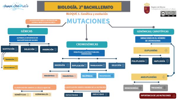 Mapa Conceptual Tipos De Mutaciones