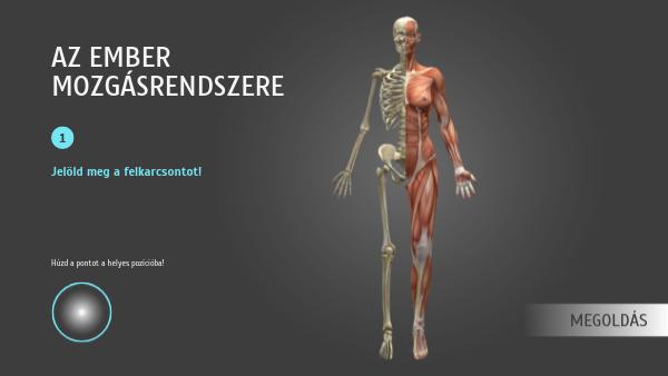 csont izom komplex mexidol ízületi fájdalmak kezelésére
